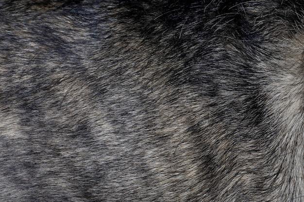 Закройте вверх по серой коже собаки красивое животное собаки кожи природы животное для животного и предпосылки Premium Фотографии