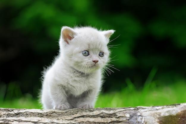 Primo piano di gattino grigio sulla natura Foto Gratuite