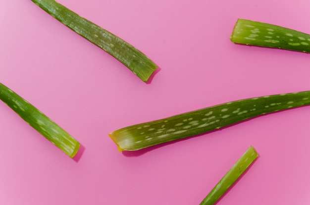 Close-up of green aloe vera leaves on pink background Free Photo