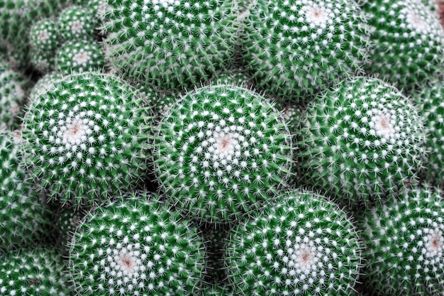 Close up green cactus background Premium Photo