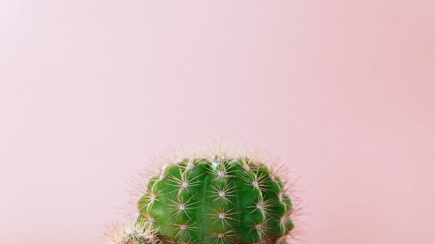 Close-up green cactus on a pink background. minimal decoration plant on color background with copy space. Premium Photo