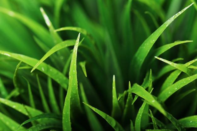 Chiuda in su di erba verde Foto Gratuite
