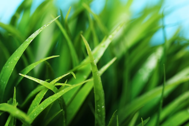 Close up of green grass Free Photo