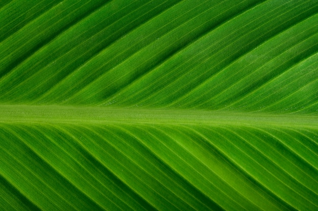 Close up green leaf line Free Photo
