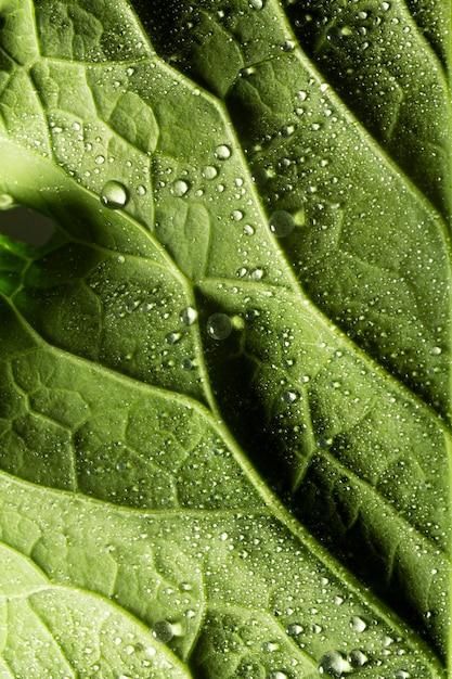 Close-up nervi foglia verde con gocce d'acqua Foto Gratuite