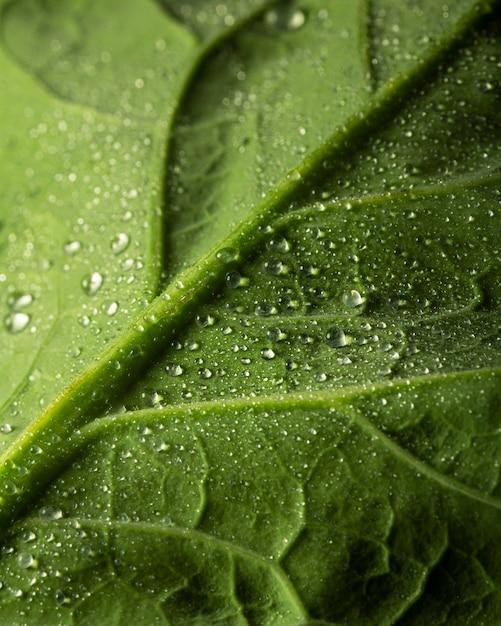 Foglia verde del primo piano con le gocce d'acqua Foto Gratuite