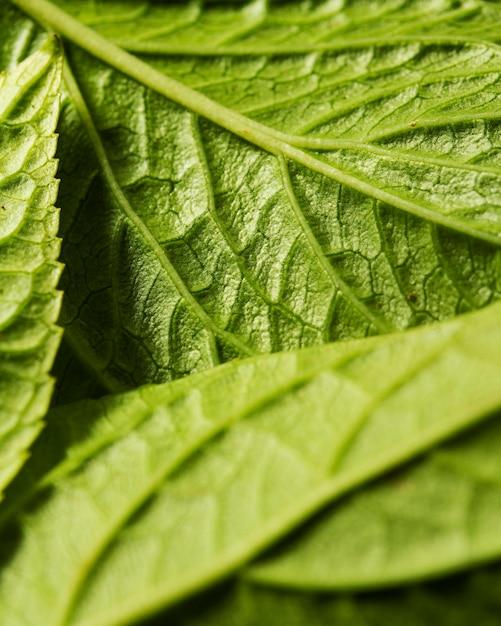 Primo piano dei nervi delle foglie verdi Foto Gratuite