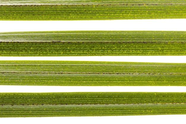 Close-up di foglie verdi Foto Gratuite