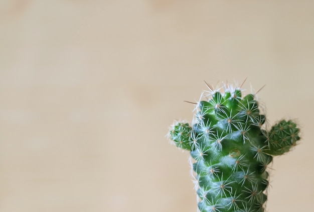 Close-up of a green mini cactus on the wooden wall Premium Photo