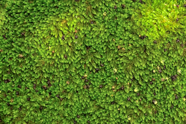 Close up green moss texture on stone and rock, background, nature plant, moss wall Photo ...