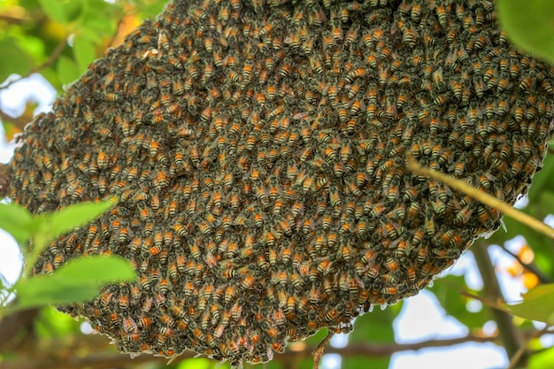 Close up group bee in honeycomb on tree. Premium Photo