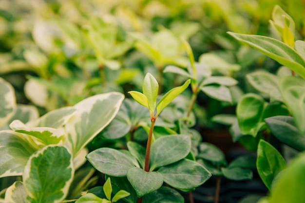 Close-up of growing plants with fresh leaves Free Photo