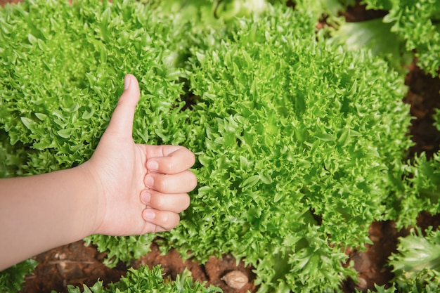 Close up hand farmer in garden during morning time food background Free Photo