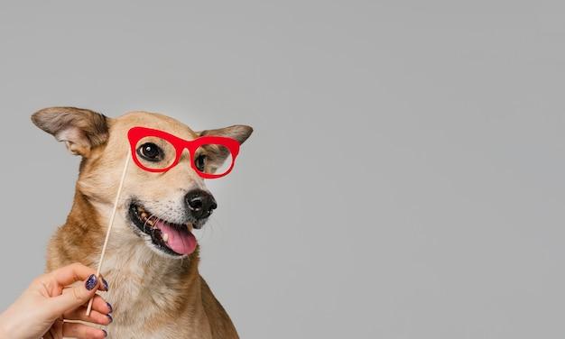 クローズアップ手持ちメガネ 無料写真