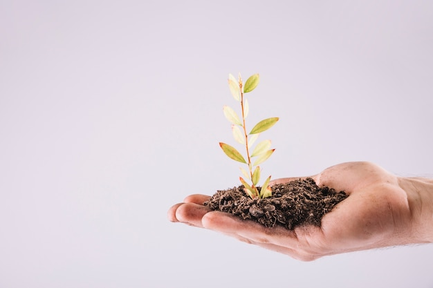 Close-up of hand holding seedling over white background Free Photo