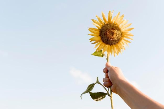 Close-up hand holding up sunflower Premium Photo