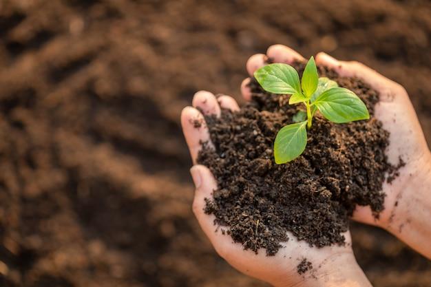 若い緑の木の芽を押しながら土に植える手を閉じる Premium写真