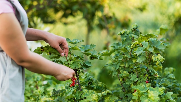 Close-up hand picking fruits Free Photo