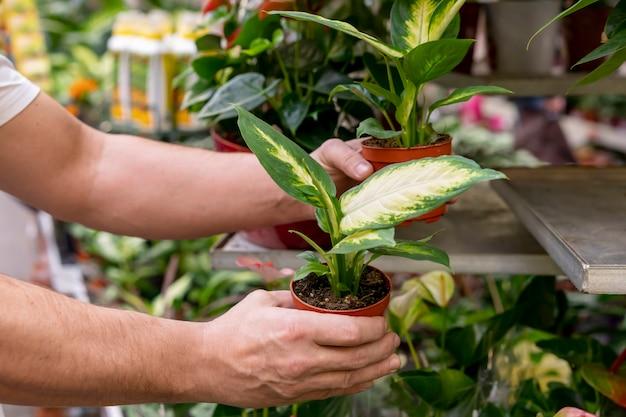 Макро руки держат комнатные растения Бесплатные Фотографии