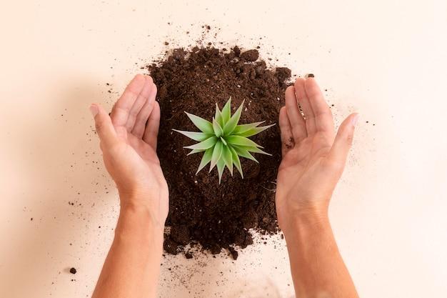 Mani del primo piano che mostrano pianta Foto Gratuite