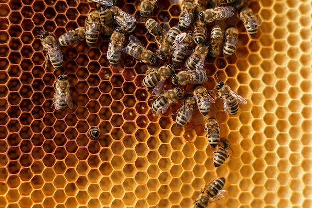 Close up honeycomb in wooden frame with bees on it. Premium Photo