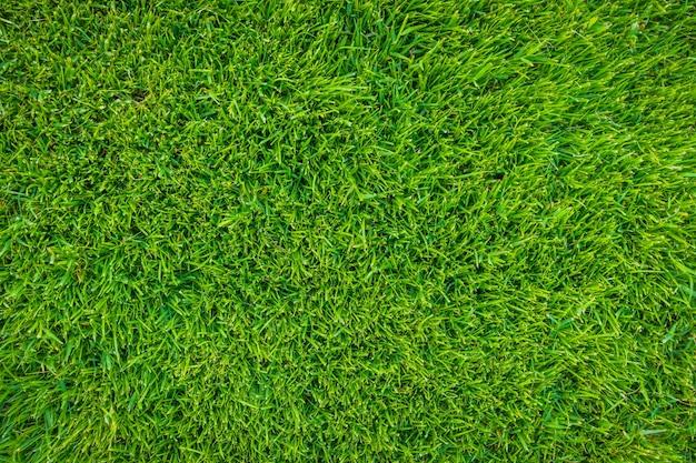 신선한 봄 녹색 잔디의 클로즈업 이미지 무료 사진