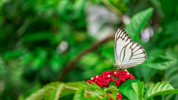 Close up insect picture of butterfly feeding on flower in garden Premium Photo