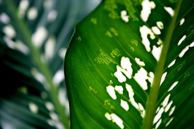 Close-up of leaves in jungle Premium Photo