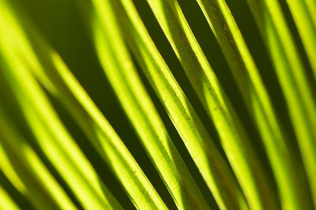 근접 잎 유기 배경 무료 사진