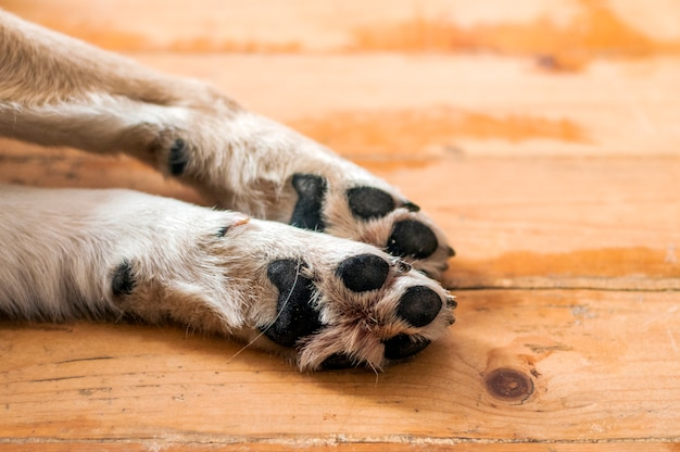 Close up of light colored puppy paw. dog feet and legs on wood. close up image of a paw of homeless dog. skin texture Free Photo