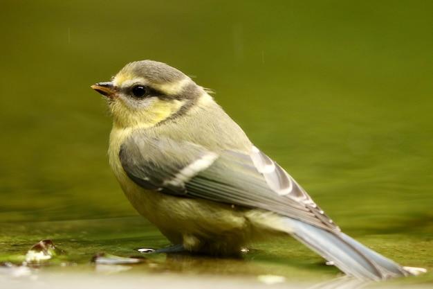 Primo piano di uccellino sulla riva del fiume Foto Gratuite