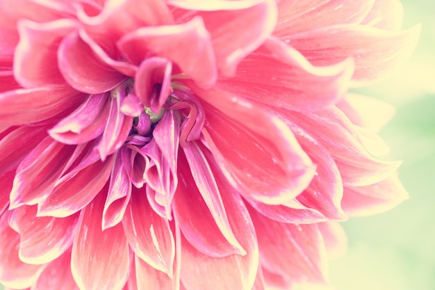 Close up macro flower Free Photo