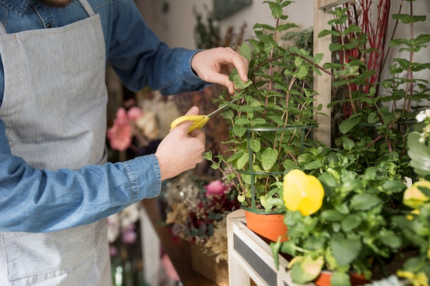 Close-up of male florist cutting the leaves of plant with scissor Free Photo