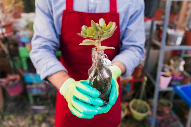 Close-up of male gardener's hand holding planted cactus plant in the glass bottle Free Photo