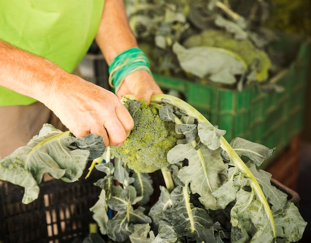 Close-up of male hand putting broccoli in crate while shopping at market Free Photo