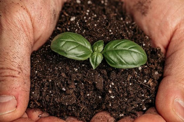 Primo piano delle mani maschii che tengono terreno e pianta in crescita Foto Gratuite