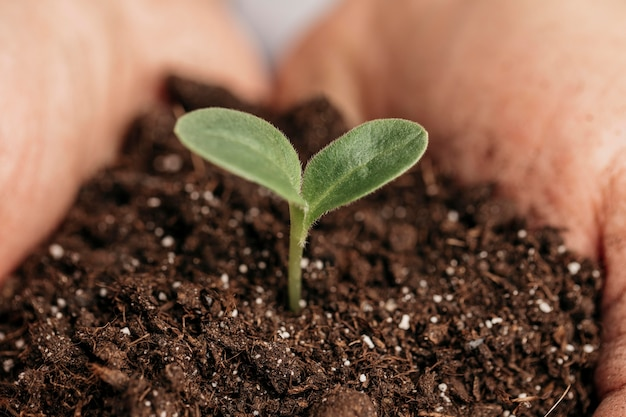 Close-up of male hands holding soil and plant Free Photo