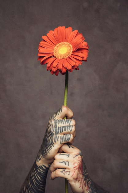Close-up of man's hand with tattooed holding fresh gerbera flower against grey wall Free Photo
