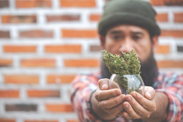 Заделывают растение марихуаны в стакан на руках Бесплатные Фотографии
