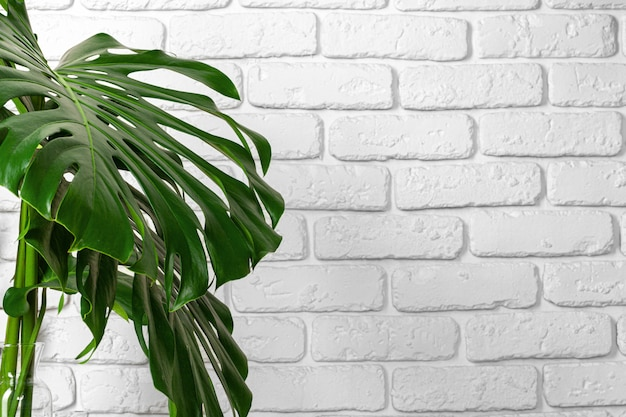 Premium Photo Close Up Of A Monstera Plant Leaves Against White Brick Wall Copy Space