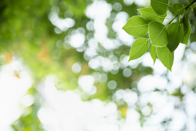 Close up of nature view green leaf on blurred greenery background under sunlight with bokeh and copy space background natural plants landscape, ecology cover concept. Premium Photo