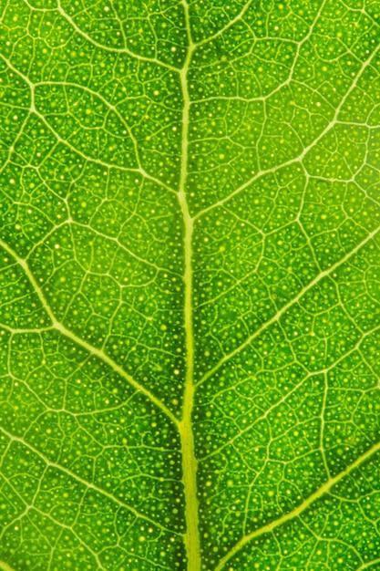 Close-up nervi di foglia verde Foto Gratuite