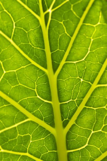 緑の葉のクローズアップ神経 無料写真