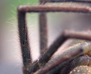 Фото между ног крупным планом бесплатно 11 фотография