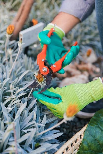 セキテイと花を切る男性庭師のクローズアップ 無料写真