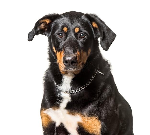 白い背景の前で雑種犬のクローズアップ Premium写真