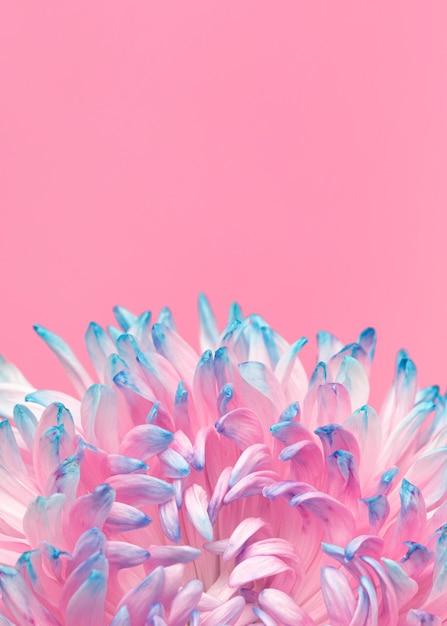 Крупный план красивого распустившегося цветка Бесплатные Фотографии