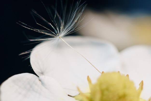 タンポポの綿毛と白いイチゴの花のクローズアップ Premium写真