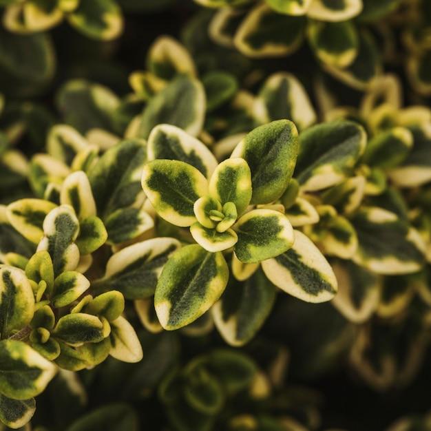 아름 다운 식물 잎의 클로즈업 무료 사진