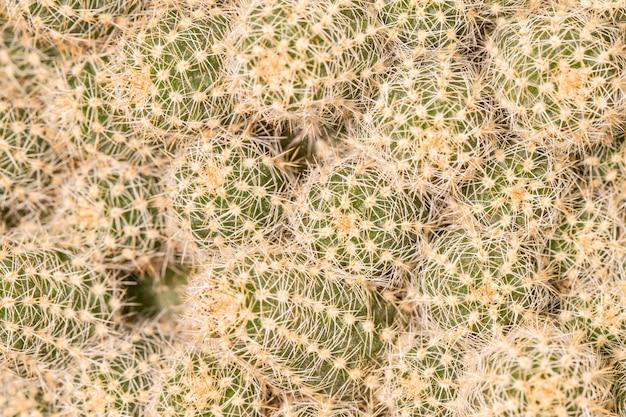 선인장 식물의 클로즈업 무료 사진